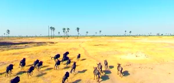 Bulawayo Video