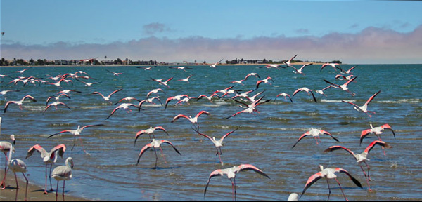 Walvis Bay Blog